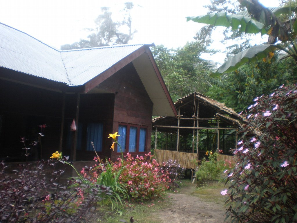 Arfak jungle lodge