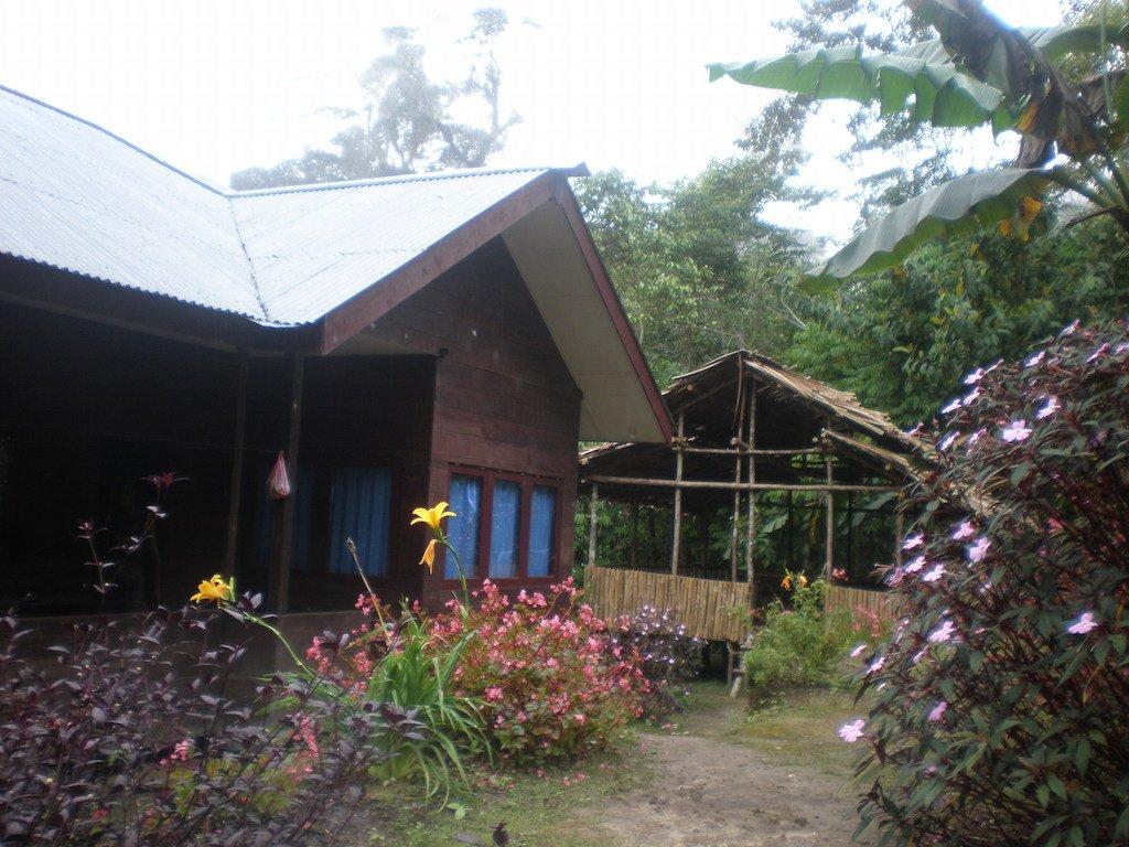 Arfak jungle lodge