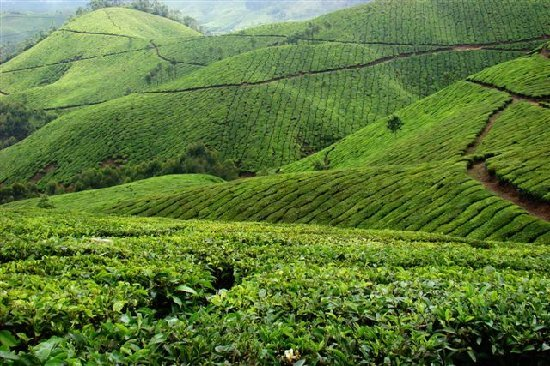 Agrowisata Malabar - Bandung - accommodatie Indonesië ...