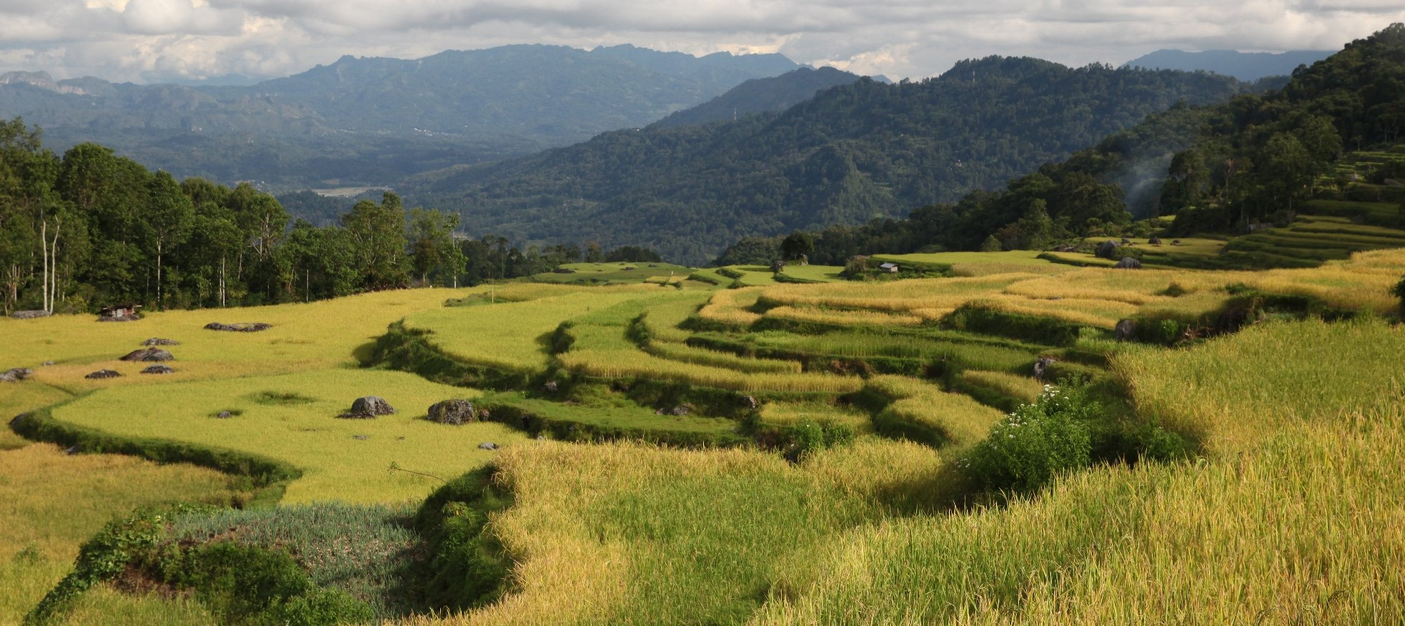 Toraja Batutumonga