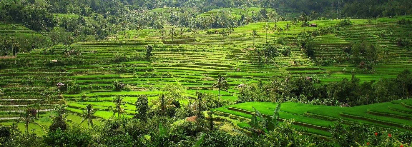 Bali sawa