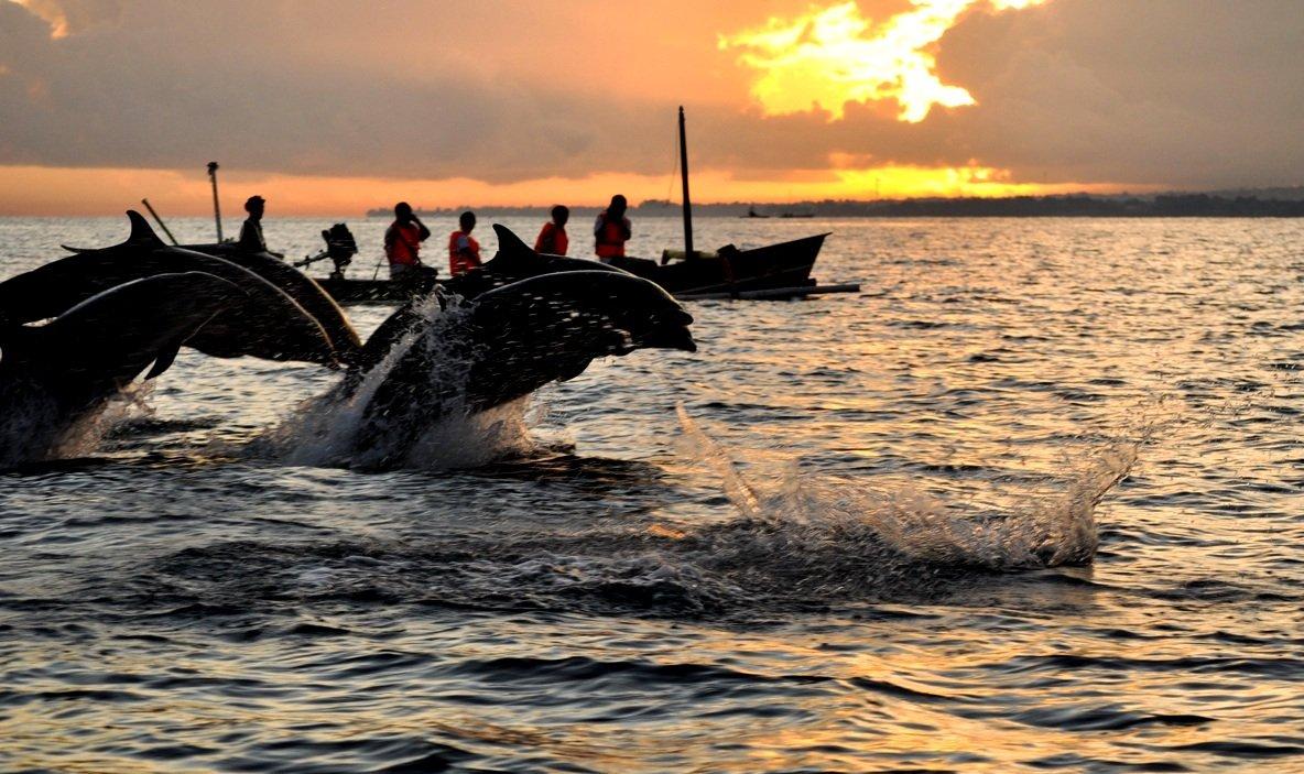 Dolfijnen spotten bij Lovina
