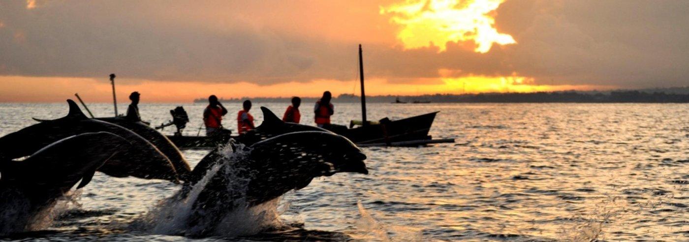 Bali Lovina dolphins
